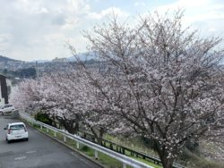 春到来!!